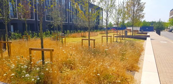 Chobham Manor, Olympic Park, Stratford